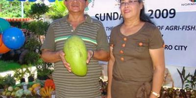 Филиппинцы вырастили манго-рекордсмена