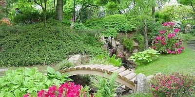 Японский сад.