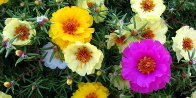 Как подобрать цветы для участка