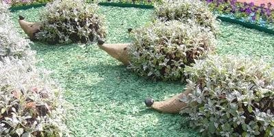 Поселите ежиков в саду