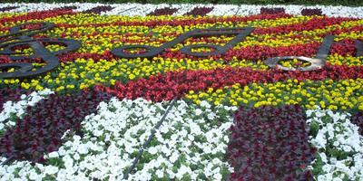 20 цветников - 20 идей для дачи