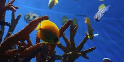 Путешествие в страну детства – аквариум Барселоны