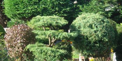 Мини парк в Бакингемшире ( 5-я серия)