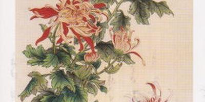 Изображения китайских хризантем