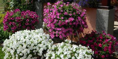 Моё увлечение - цветы