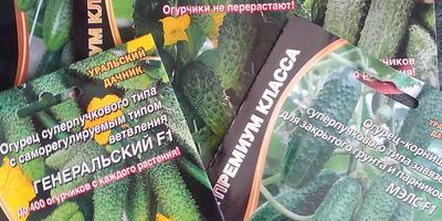 Подарок от Seedspost.ru: на следующий год будем беспредельничать