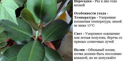 """Цветочный кроссворд """"Мои любимые цветы""""."""