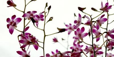 Орхидеи. Растения из дальних стран на наших окнах