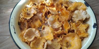 Первый раз за грибами