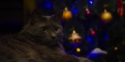 Новогоднее настроение!!