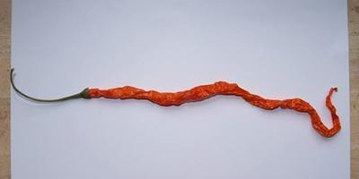 Самый длинный в мире