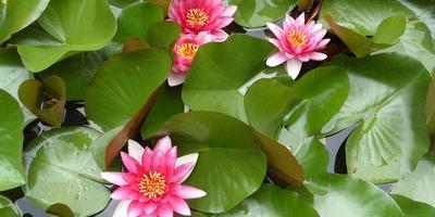 4 правила посадки водных растений