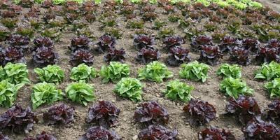 Летний хоровод овощей с красивыми листьями