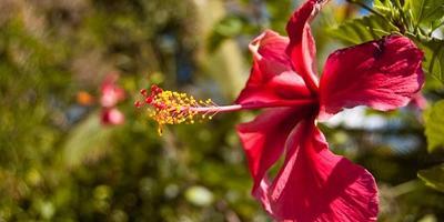 Самые красивые цветы Гватемалы