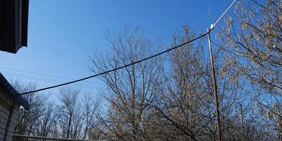 26 февраля на моем участке: чеснок на подходе
