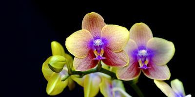 Крупнейшая выставка орхидей открылась в Париже