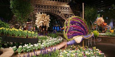Филадельфийское цветочное шоу 2014