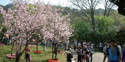 Открытие паркового фестиваля в Тайбэе