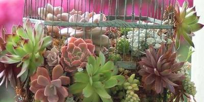 5 нестандартных клумб для вашего сада