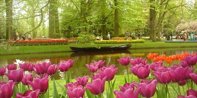 Открылся сезон посещений самого большого в мире парка-цветника «Де Кёйкенхоф»