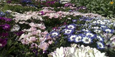 27 марта в Непале открывается международная цветочная выставка «International Flora Expo 2014»