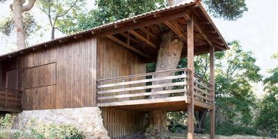 Содружество с природой — деревянная дача на лесистом участке