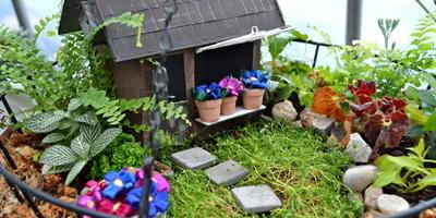 Мини-сад в горшке — выбираем растения