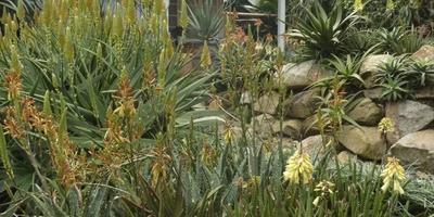 История ландшафтного дизайнера Майкла Дента и его сад алое