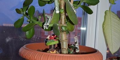 Мое вредное дерево, но безумно ЛЮБИМОЕ!!