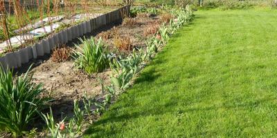 Травянистые пионы