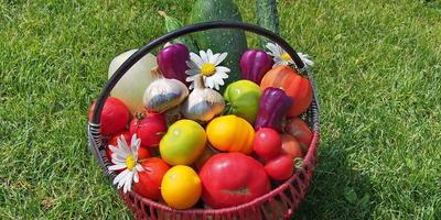 Наш зеленый огород нас прокормит целый год