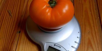 """Томат """"Оранжевый гигант"""" - мало семян, много мяса!"""