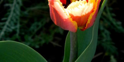 Весна в Подмосковье