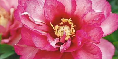 Выбираем цветы - эффектные, но простые в уходе