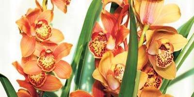 Волшебный мир орхидей