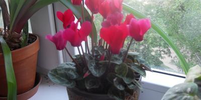 Мои домашние цветы