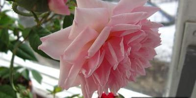Цветы в моём доме