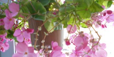Конкурс мои домашние цветы