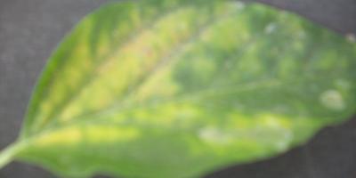 Прошу помочь разобраться в причинах появления пятен на листьях помидоров и перца