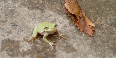 Царевна-лягушка  -  наша подружка