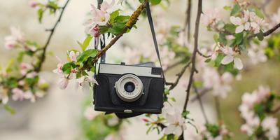 Стартовал второй весенний этап конкурса дачных фотографий!