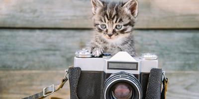 Стартовал XVII этап конкурса дачных фотографий