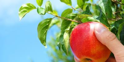 Яблочные выходные на 7 дач!