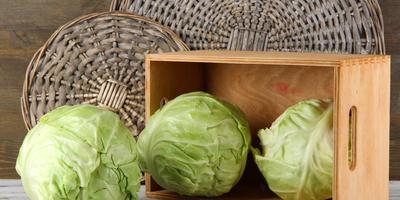 Как вы смотрите на идею пошить для защиты капусты мешки из лутрасила?