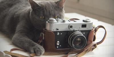 Внимание! Участники конкурса дачных фотографий! Читаем это объявление!!!