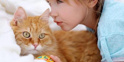 На 7 дач - выходные с любимыми кошками и котами!