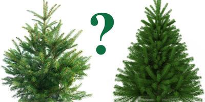 Какую ёлку вы наряжаете на Новый год - живую или искусственную?