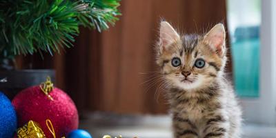 Какое имя дать котенку?