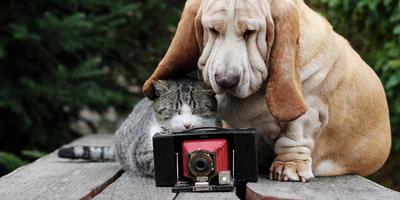 Изменения в Правилах фотоконкурса