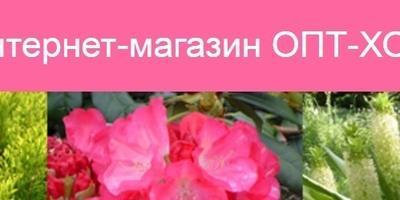 """Отзывы об интернет-магазине """"ОПТ-ХОЗ"""""""